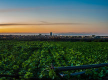 Jordbruksmark- och stadsljus som delar samma land Arkivbild