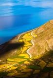 Lake-kust av Yamzho Yumco Royaltyfri Fotografi