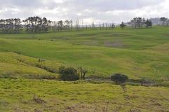 Jordbruksmark på Nya Zeeland Royaltyfri Foto