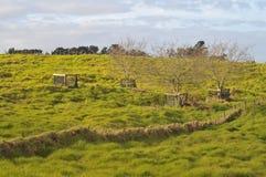 Jordbruksmark på Nya Zeeland Royaltyfria Foton