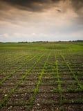 Jordbruksmark på skymning Royaltyfri Fotografi