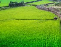 Jordbruksmarken Royaltyfri Foto