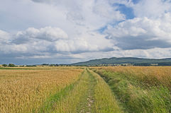 jordbruksmarker Arkivbild