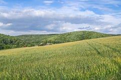 jordbruksmarker Arkivfoto