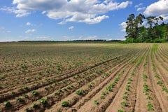 jordbruksmarkfält Arkivbilder