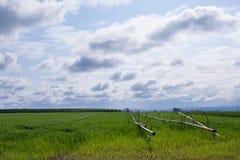 jordbruksmarkgreen Arkivbild