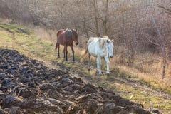 Jordbruksområde med hästar Royaltyfri Foto