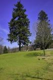 Jorddag - träd och gräsplan Royaltyfria Bilder