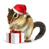 Jordekorre i den röda Santa Claus hatten med gåvaasken Arkivbild