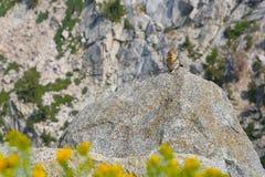 Jordekorrelandskap Yosemite Arkivbilder