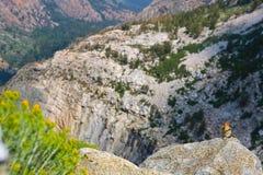 Jordekorrelandskap Yosemite Royaltyfri Foto