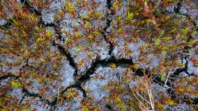 Jorden knäckas En torka i jordbruk arkivbilder