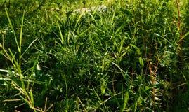Jordgräs Royaltyfri Foto