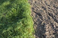 jordgräs Fotografering för Bildbyråer