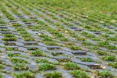 Jordgräs och tegelsten Royaltyfria Bilder