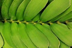 Jordgrön växt för abstrakt svartsvart Royaltyfria Bilder