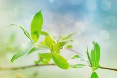 Jordgröna broschyrer av en pil på en ljus vårbakgrund Royaltyfri Fotografi
