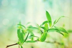 Jordgröna broschyrer av en pil på en ljus vårbakgrund Arkivfoto