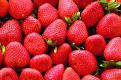 jordgubbar Arkivfoto