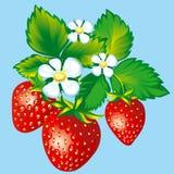jordgubbar stock illustrationer