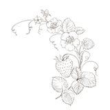 Jordgubbar. stock illustrationer