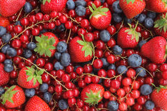 Jordgubbar, blåbär, hallon och Blackberry Arkivbild