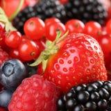 Jordgubbar, blåbär, röda vinbär, hallon och blackbe royaltyfri fotografi