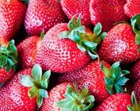 jordgubbar för bakgrundsmatserie Royaltyfria Foton