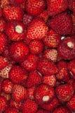 jordgubbar för bakgrundsmatserie Arkivbilder