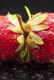 Jordgubbar frukt som är röd, makro, minimalist som är våt, Royaltyfri Bild