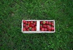 Jordgubbar i en korg Fotografering för Bildbyråer