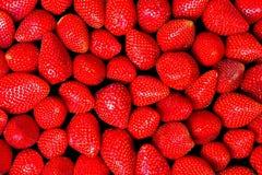 jordgubbar ii fotografering för bildbyråer