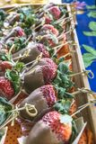 Jordgubbar med choklad fotografering för bildbyråer