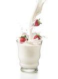 Jordgubbar med mjölkar hällt in i ett exponeringsglas med färgstänk bakgrund isolerad white Arkivbilder