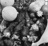 Jordgubbar och annan frukt Fotografering för Bildbyråer