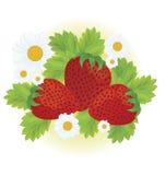 Jordgubbar och tusenskönablommor Royaltyfri Fotografi