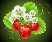 Jordgubbar som omges av blommor Royaltyfri Illustrationer
