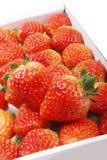 jordgubbe Arkivbild