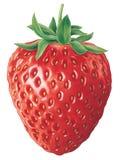 jordgubbe Royaltyfri Bild