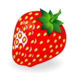 jordgubbe Royaltyfria Bilder