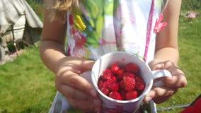jordgubbe i en råna royaltyfri fotografi