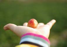 Jordgubbe i hand fotografering för bildbyråer