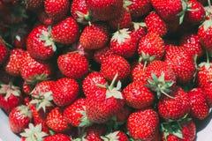 jordgubbe Jordgubbar Organisk bärbakgrund Royaltyfria Foton