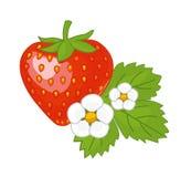 Jordgubbe med sidor och blommor Vektor Illustrationer