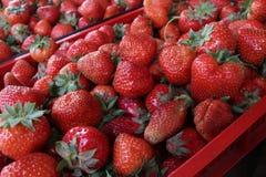 jordgubbe Nya organiska jordgubbar i dagsljus på en marknad Bär fruktt bakgrund sund mat En ljus radda, är nya bär av en jordgubb Arkivbild