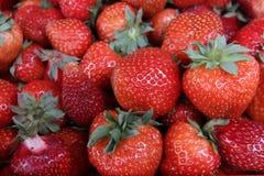 jordgubbe Nya organiska jordgubbar i dagsljus på en marknad Bär fruktt bakgrund sund mat En ljus radda, är nya bär av en jordgubb Arkivfoto