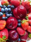 Jordgubbe plommoner, blåbärstilleben, sund mat, sommar Berry Gardening royaltyfria bilder