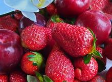 Jordgubbe röda plommoner, blåbärstilleben på, sund mat, sommar Berry Gardening arkivbild