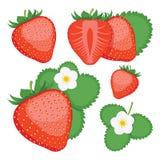 jordgubbe Samling av hela och skivade jordgubbebär Royaltyfri Foto