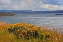 Jordgubbebehållare Utah Arkivbilder